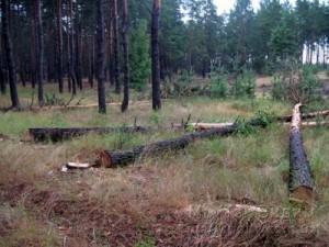Волноваха вырубка леса 08.08.17 4