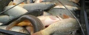 рыба отлов