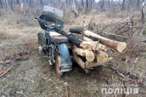 Маруиполь вырубка леса 18.02.19 2