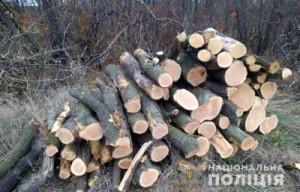 Мариуполь вырубка леса 17.11.20 1